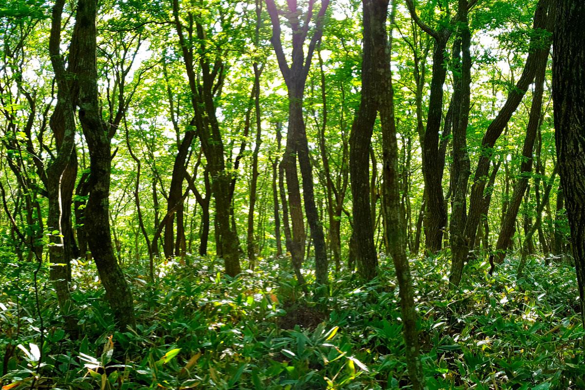 PROGETTO CARTER - Biochar e Agroforestazione: binomio vincente per la conservazione e sequestro del carbonio nel terreno.